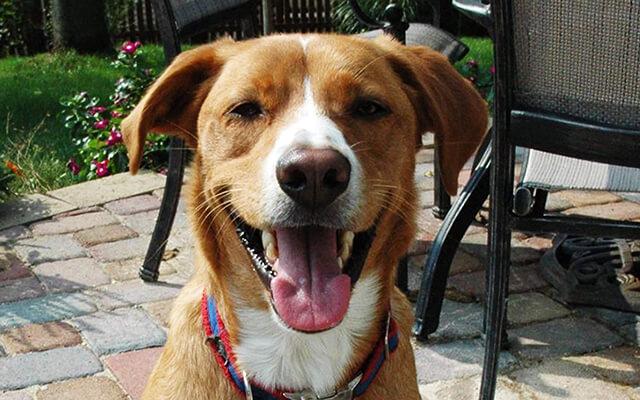Happy dog on patio