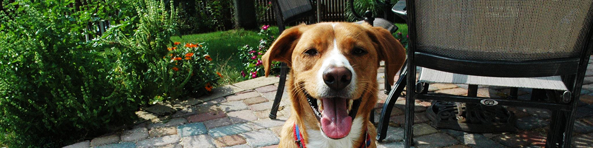 force free dog training