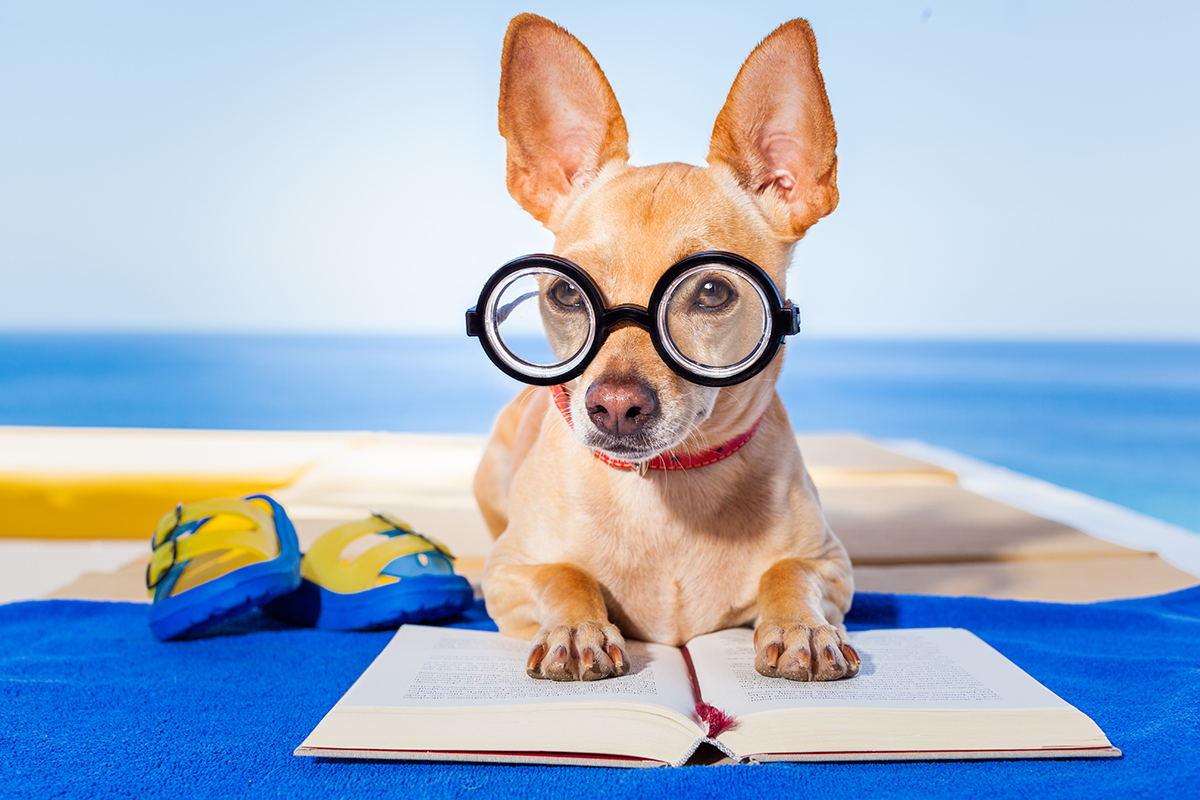 Dog wearing glasses reading by the pool