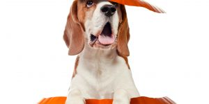Dog training in Ellicott City and Columbia, Howard County, Maryland