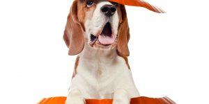 Dog training in Ellicott City and Columbia, Howard County, Maryland