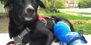 Dog wearing fixator and bandage while sitting on blanket in yard
