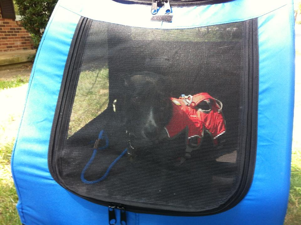 Dog in a dog stroller to experience sights, smells and sounds for mental enrichment.