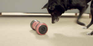 Dog playing with food puzzle toy for mental enrichment