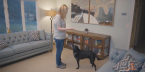Sill frame from video teaching your dog how to sit