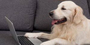 Dog next to laptop