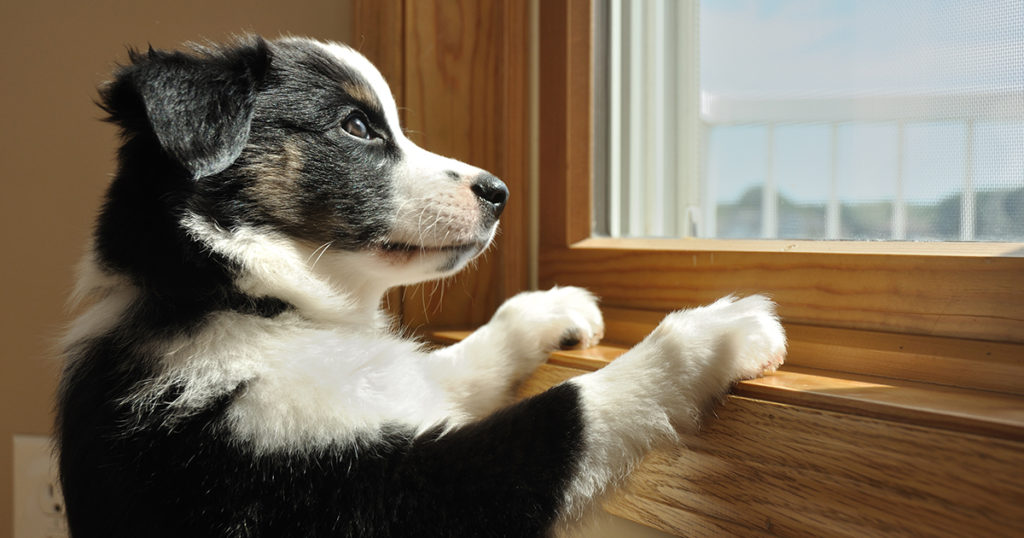 Puppy with paws up on window frame looking out window.